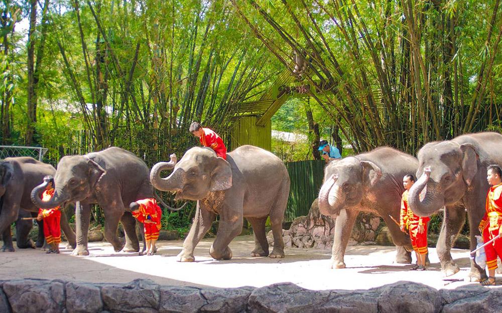 بازدید از دنیای سافاری و پارک دریایی در تور تایلند