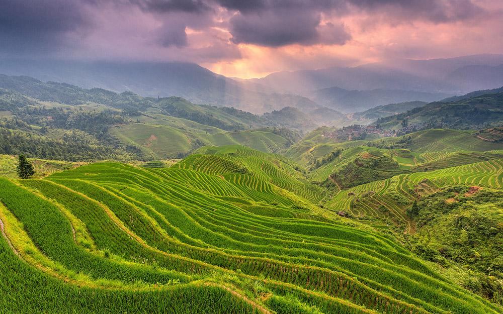 5 تا از زیباترین شالیزارهای پلکانی چین