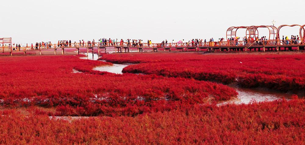 بازدید از ساحل سرخ در تور چین