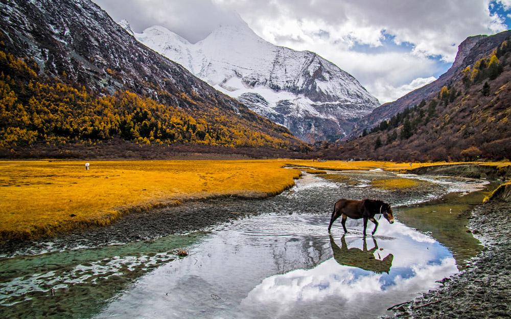 ذخیره گاه طبیعی یادینگ چین، بهشت گمشده طبیعت دوستان